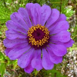 une fleur avec une couronne de fleurs ! :)