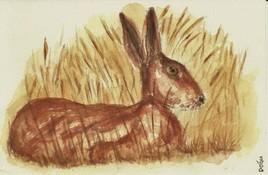 Le lièvre dans les champs