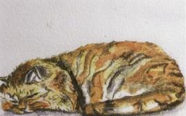 Ne réveillez pas le chat qui dort (40x30)