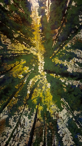 forêt de Villecartier