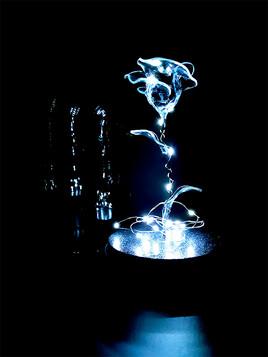 Rose noire avec son dôme en verre