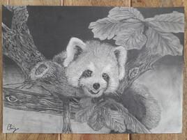 Panda Roux , Version 2