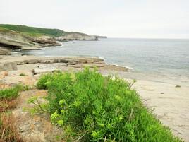 paysage cantabrique