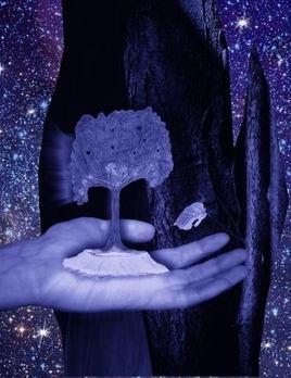 arbre-oracle