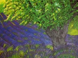 petit bout de Provence