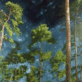 La nuit dans les bois