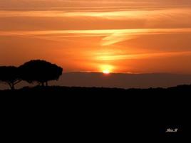 Coucher de soleil au pied des arbres