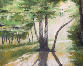 Forêt à Pszczyna