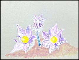 Anémone de Haller (Anemone halleri) / Painting A Halleri's anémone
