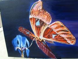 Joli papillon du jour