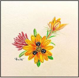 Fleur de gorteria diffusa / Painting A Beetle daisy flower