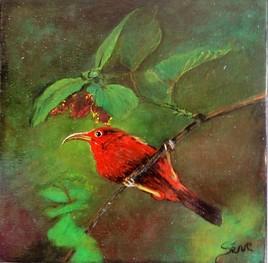 Cardinal (vendu)