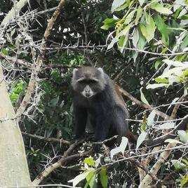 autre singe