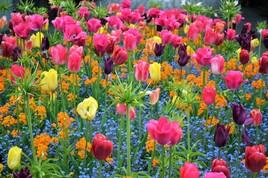 En floraison