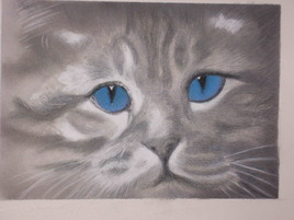Blue catty