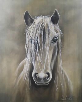 Face au cheval
