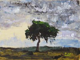 Le petit arbre de la Côte