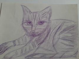 caractère de chat