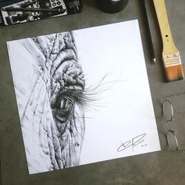 L'œil de l'éléphant