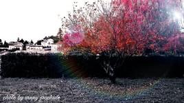 L'arbre heureux