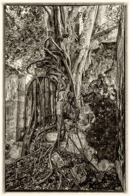 la prison emprisonnée 6 (Petit Canal - Guadeloupe) tirage dibond® 40 x 60 cm