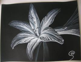 Fleur au pastel - Lys blanc