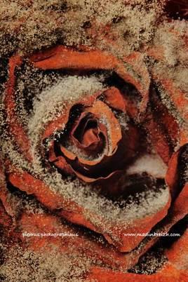 les fleurs du mal - renoncement
