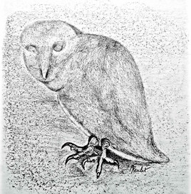 Dessin Hibou des marais de Pisanello / Drawing The Short eared owl of Pisanello