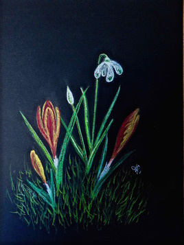 1ers crocus et perce-neiges ! / Drawing first crocus and snowdrops