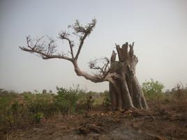 l'arbre mystique