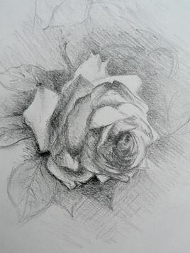 the white rose...