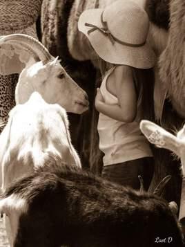 La petite fille aux chèvres