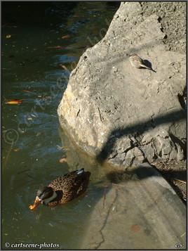 L'oiseau et le canard