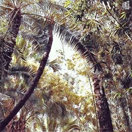 Palmiers - Part 2