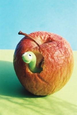 le ver et la pomme