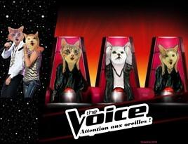 The voice , l'émission qui rend sourd  ! :))