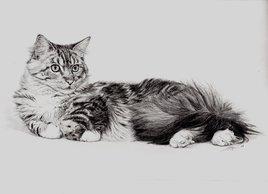 Velour de chat