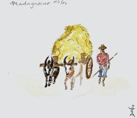 Charette à  zébus