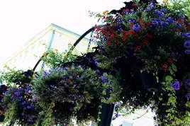 Chasse au fleurs
