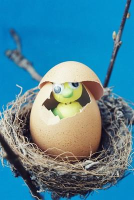oiseau + nid