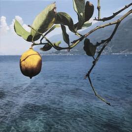 Un citron sur l'île de Brissago