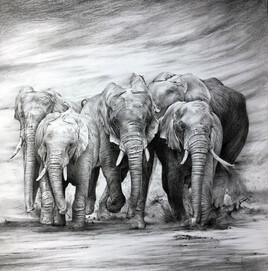 Les 5 éléphants