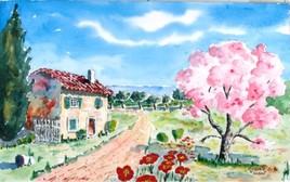 L'amandier rose en Provence
