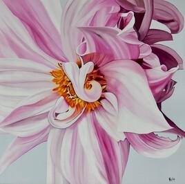 Dalhia rose