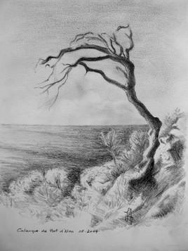 Le pin foudroyé (calanque de port d'Alon)