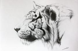 Dessin de tigre 3