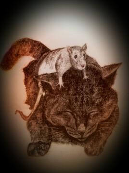 Le chat et la souris  1