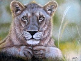 Une lionne vous regarde