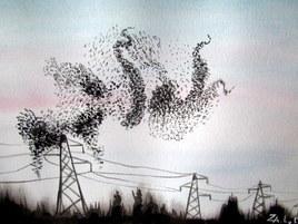 Vol d'étourneaux à la tombée du jour (aquarelle)