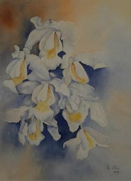 orchidée coelogine cristata